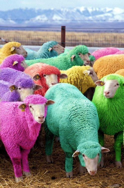 A picture named sheep.jpg
