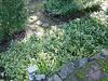 2003-03-08 006.jpg