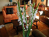 Glad to have gladiolas!