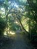 Hillside path in Berkeley