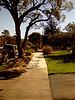 A magical North Berkeley street