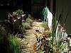 Mid-morning garden