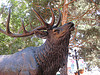 Under the elk in Boulder