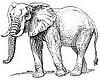 Standard elephant