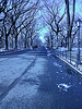 Central Park bluey