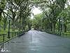 Empty rainy park