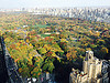 Central Park foliage from high-up.
